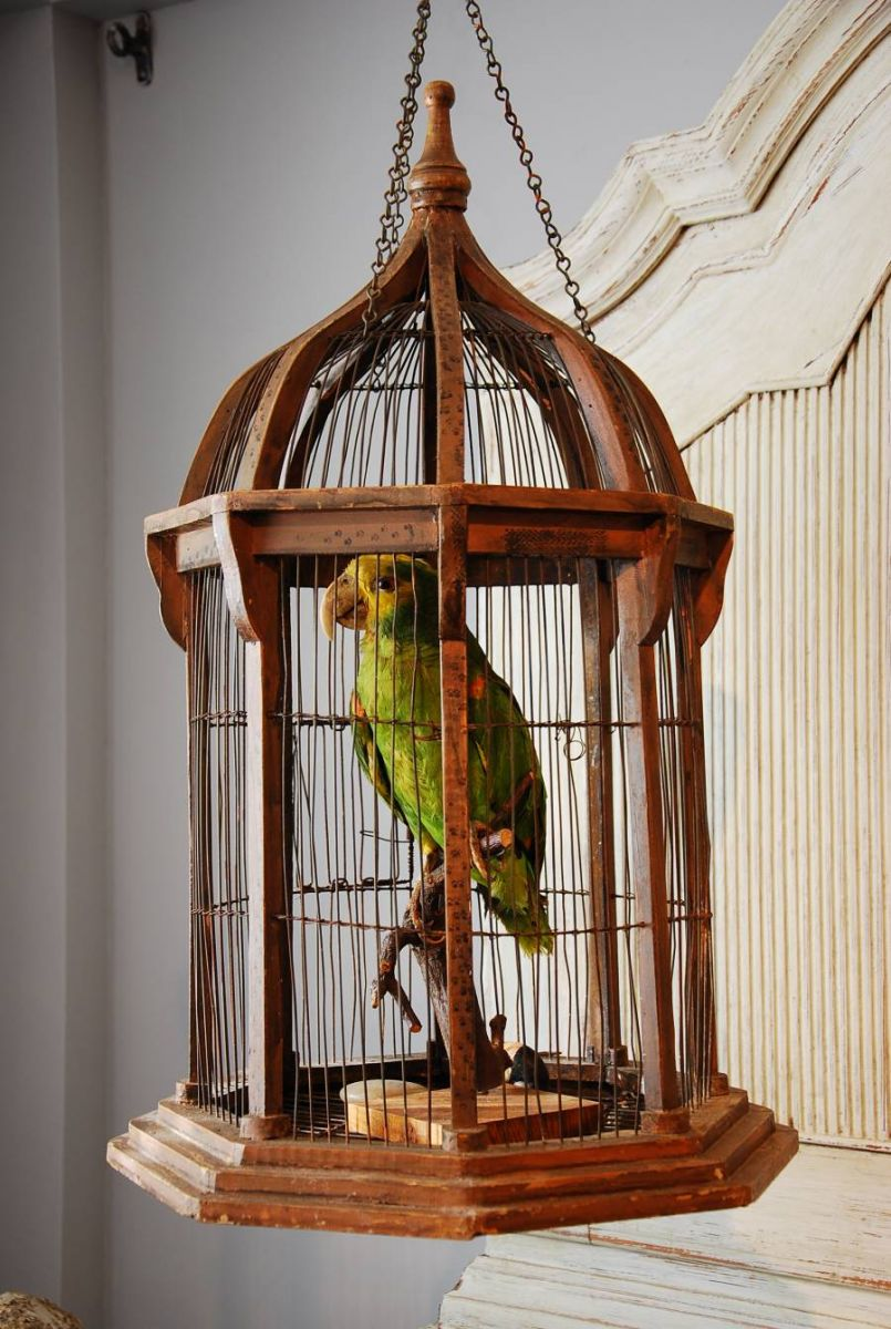Green Parrot In A Cage Stock Blanchard Collective